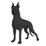 黑人丹麦种大狗的颜色图象 库存照片