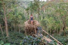 人为巢的少妇在热带巴厘岛,印度尼西亚雨林  免版税库存图片