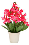 人为开花兰花开花在白色b隔绝的花束 免版税库存图片