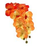人为开花兰花开花在空白balckground查出的花束 库存图片