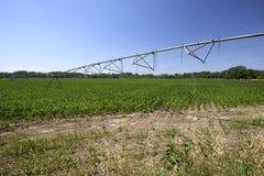 人为灌溉 库存图片