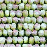 人为白色和桃红色玫瑰连续无缝的背景 库存图片