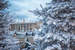 人为积雪的冷杉木在城市马赛 用雪报道的杉树分支,关闭 锋利的霜 图库摄影