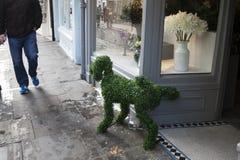 从人为草,推力的狗他的在街道上的脚在附近 免版税库存图片