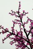 人为被带领的轻的树在城市 库存图片