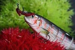 人为诱剂做了金属或塑料叮咬在油煎的鱼的人为诱饵 图库摄影