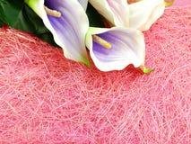 人为水芋百合开花花束有桃红色纹理背景 库存图片
