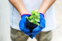 人举行植物 免版税库存图片