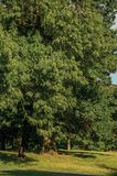 人们、草坪、树和蓝天在下午光末期,在拉埃肯公园在布鲁塞尔 库存照片
