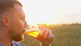 人们、饮料和酒精概念-接近从玻璃的有胡子的年轻人饮用的啤酒在麦子的热的夏日 股票视频