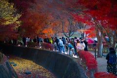 人们参观富士Kawaguchiko秋叶节日 库存照片