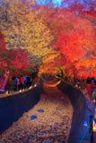 人们参观富士Kawaguchiko秋叶节日 库存图片