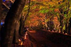 人们参观富士Kawaguchiko秋叶节日 免版税库存图片
