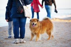 人们和一条逗人喜爱的Elo狗在海滩 免版税库存图片