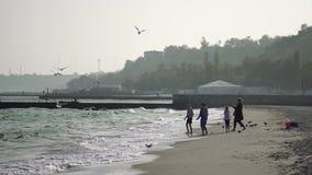 人们喂养在一个离开的海海滩的海鸥 股票视频