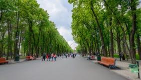 人们在一个公园 免版税库存照片