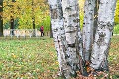 人们在凯瑟琳公园 Tsarskoye Selo 圣彼德堡 俄国 图库摄影