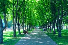 人们在城市公园休息坐长凳 有大树和长凳的小径 放松安排 免版税图库摄影