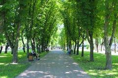人们在城市公园休息坐长凳 有大树和长凳的小径 放松安排 免版税库存照片