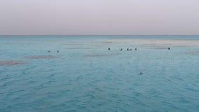 人们在红海中间游泳和在著名白色含沙海岛上的步行 股票录像