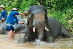 人们在Sa Noi Mae河沐浴大象在Sa Mae大象阵营在清迈,泰国 库存图片