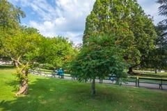 人们是松弛在公开城市公园在维也纳,奥地利 库存照片