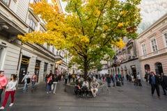 人们有在长凳的一个断裂在Kneza Mihailova,贝尔格莱德主要步行街道的树佩带的秋天颜色下  免版税库存照片
