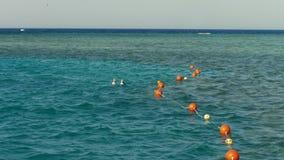 人们潜航在海的,游泳,注视沿珊瑚礁的鱼 由海的暑假 股票视频