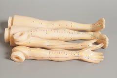 人体医疗针灸模型分开腿和手 免版税库存图片