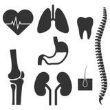 人体器官 最普遍的传染媒介图象的套 免版税图库摄影