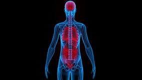 人体器官(脑子,肺,大和小肠用肾脏) 库存例证