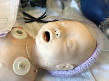 人体模型医疗训练的一个婴孩 库存图片
