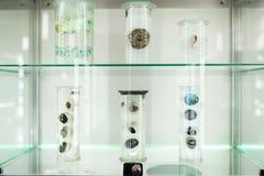 人体器官解剖学 人体的眼睛零件在甲醛水的 医学技术 图库摄影