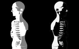 人体解剖学模型 免版税图库摄影