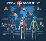人体解剖学Infographic 皇族释放例证
