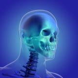 人体(器官)由在蓝色背景的X-射线 皇族释放例证