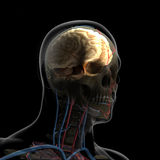 人体(器官)由在黑背景的X-射线 库存例证