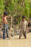年轻人使用一把犁耙抓鱼 库存照片
