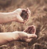 人倒从接近的麦子在麦田背景  库存照片