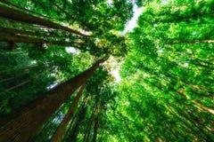 人做了森林 免版税库存图片