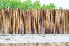 人做了竹墙壁 免版税图库摄影