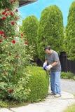 人切口灌木在庭院里 库存图片