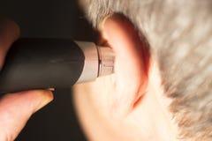 人切口耳朵头发 免版税库存图片