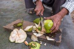 人削皮椰子 库存图片