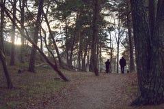 人剪影在秋天森林,从通过渗出的落日的朦胧的光里 免版税库存照片
