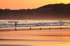 人剪影风景看法冲浪在海滩和海鸥的在五颜六色的日出夏天天空在一个沙滩 库存照片