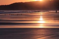 人剪影风景看法冲浪在海滩和海鸥的在五颜六色的日出夏天天空在一个沙滩 免版税库存照片