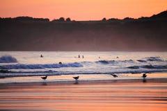 人剪影风景看法走在海滩和海鸥的在五颜六色的日出夏天天空在一个沙滩 库存图片