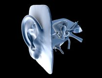 人力的耳朵 免版税库存图片