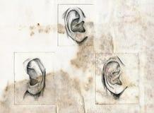 人力的耳朵 库存照片